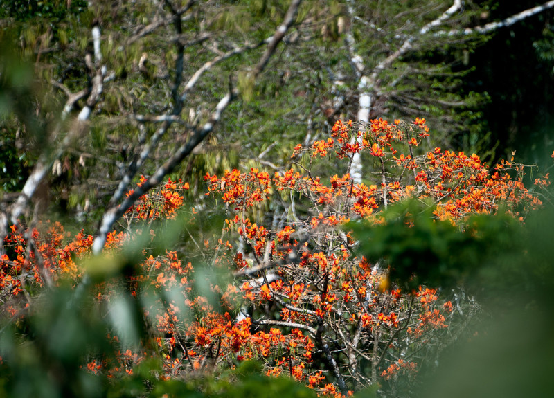 Fire Ant Tree