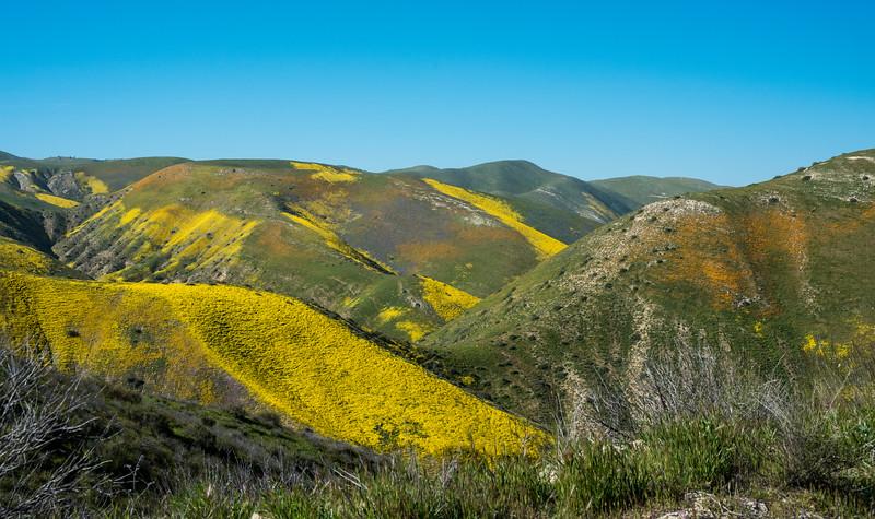 Temblor Range covered in flowers