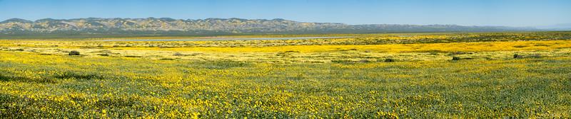 Field of flowers near the salt flats