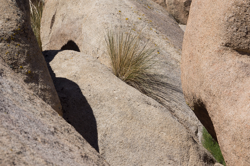 Grass growing in Granite