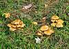 "<div class=""jaDesc""> <h4>Wild Mushrooms - October 10, 2014</h4> <p></p> </div>"