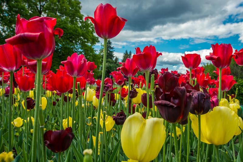 Tulip Garden, Munch Museum, Oslo Norway