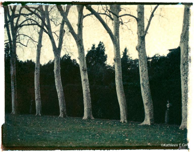 Trees, Boboli Gardens
