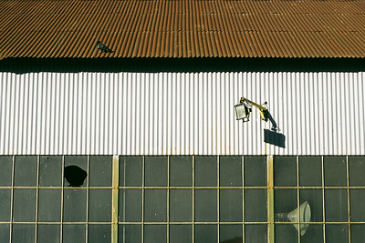 Study of a dilapidated warehouse with corrugated metal sheeting, glass windows, and a pigeon.