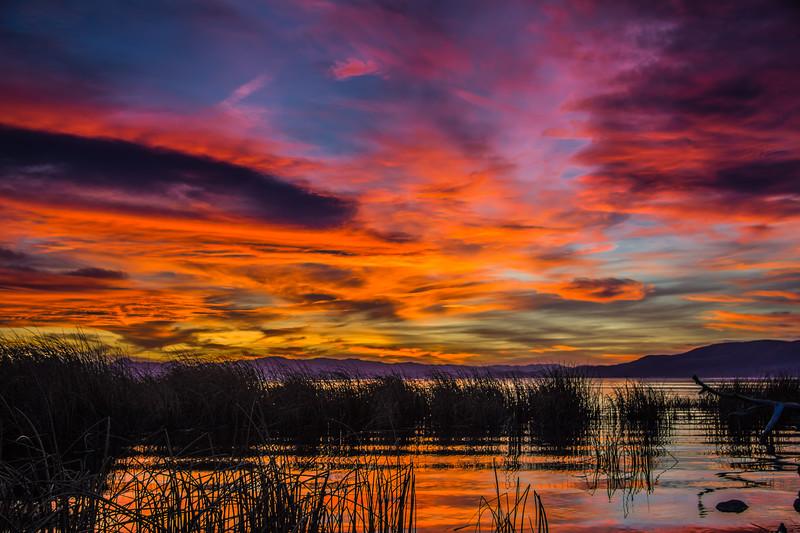 Lakeshore Sun