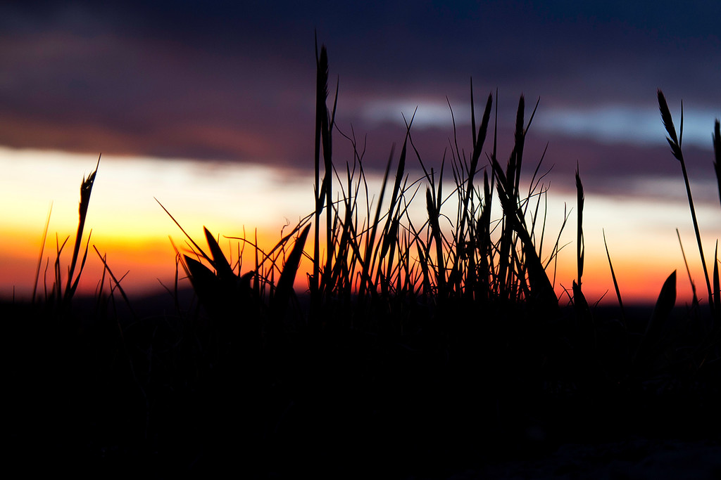 July 23rd, 2014 - Eventide Silhouette