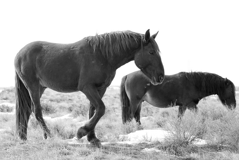 March 8th, 2013 - Rugged Resilience<br /> <br /> Wyoming mustangs roam wild in southwest areas of the state.<br /> Happy Friday!