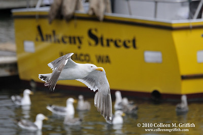 Ankeny Street ©  2010 Colleen M. Griffith.All Rights Reserved.  This material may not be published, broadcast, modified, or redistributed in any way without written agreement with the creator.  This image is registered with the US Copyright Office. www.colleenmgriffith.com www.facebook.com/colleen.griffith  The Ankeny Street fishing boat can be found in the Half Moon Bay harbor, located along the Pacific Coast near San Francisco, California. You can see more of my California by going to  www.colleenmgriffith.com/Galleries/California
