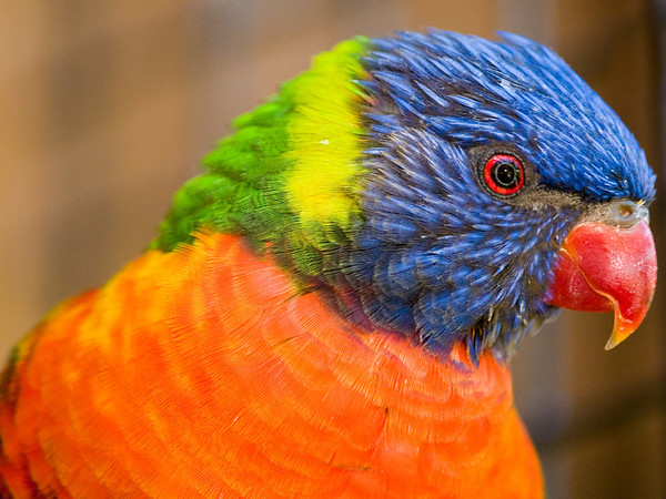 Colorful Character