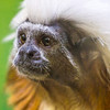 Monkey, Peoria, Zoo, Peoria, Illinois