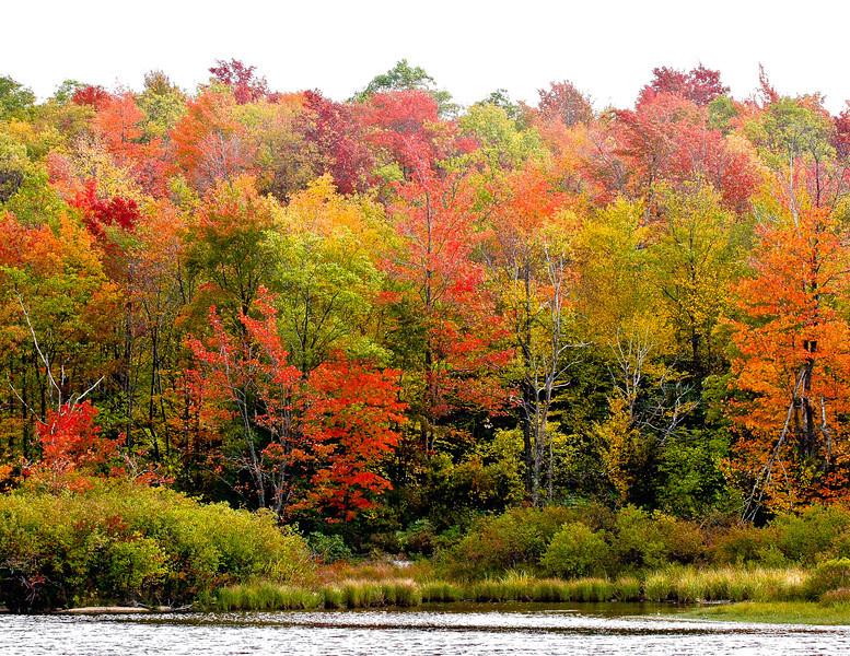 Fall Colors, West Virginia