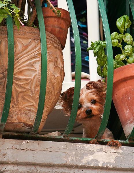 Dog, Naples, Italy