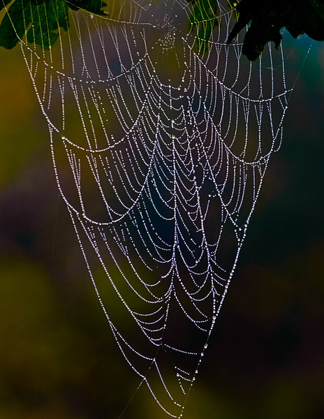 Spider Web with Morning Dew, Washington, West Virginia