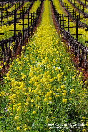 Napa Valley Mustard Festival © 2008 Colleen M. Griffith. All Rights Reserved.  This material may not be published, broadcast, modified, or redistributed in any way without written agreement with the creator.  This image is registered with the US Copyright Office. www.colleenmgriffith.com www.facebook.com/colleen.griffith