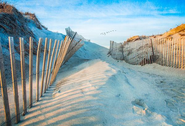 Dune Flock