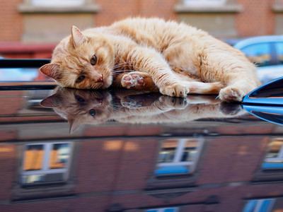 street cat