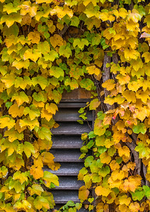 city autumn leaves