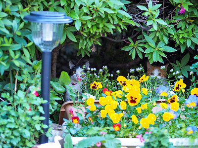 kitten hiding in garden