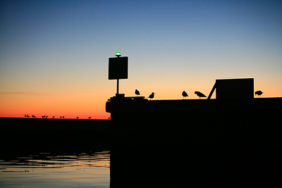 birds-on-breakwater2