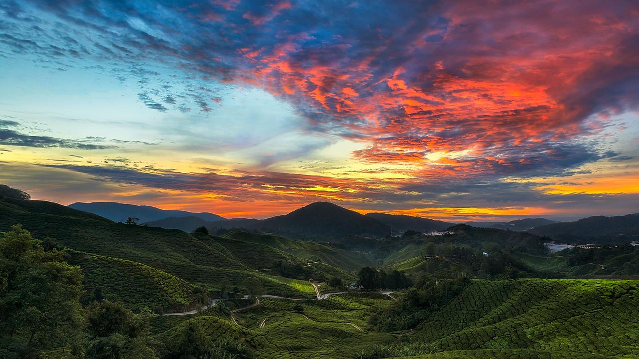 Burning Tea Leaf | Malaysia