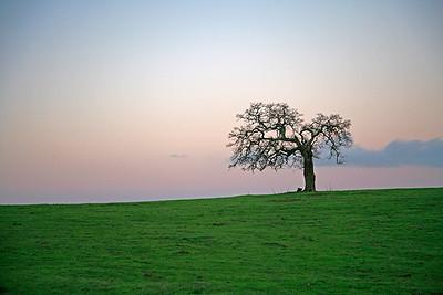 sand hill-tree17