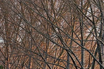 trees6835