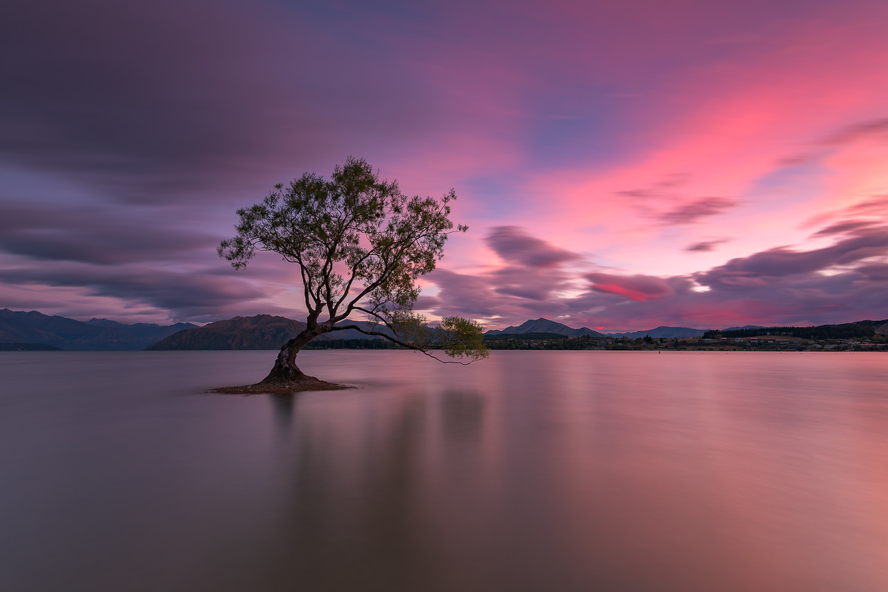 Tree of Solitude || New Zealand