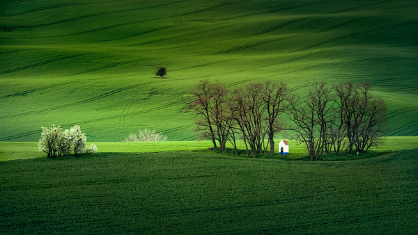 The New Carpet || Moravia, Czech Republic