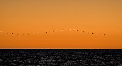 string-of-birds_0437