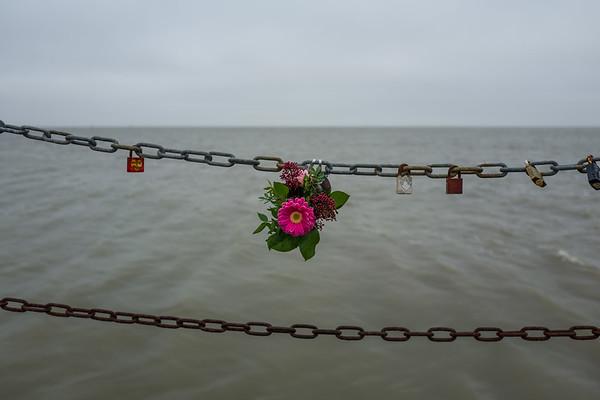 Flowers at a chain in Wilhelmshaven