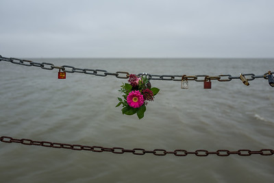 Flowers at a chain in Wilhelmshaven