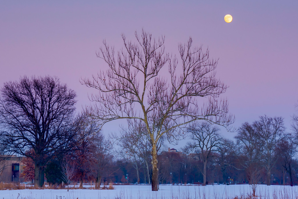 Moonrise over Forest Park