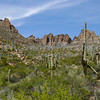 Saguaro Cactus in Arizona.