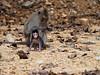 Little monkey in Koh Chang