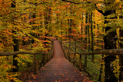 Autumn Forest || Croatia