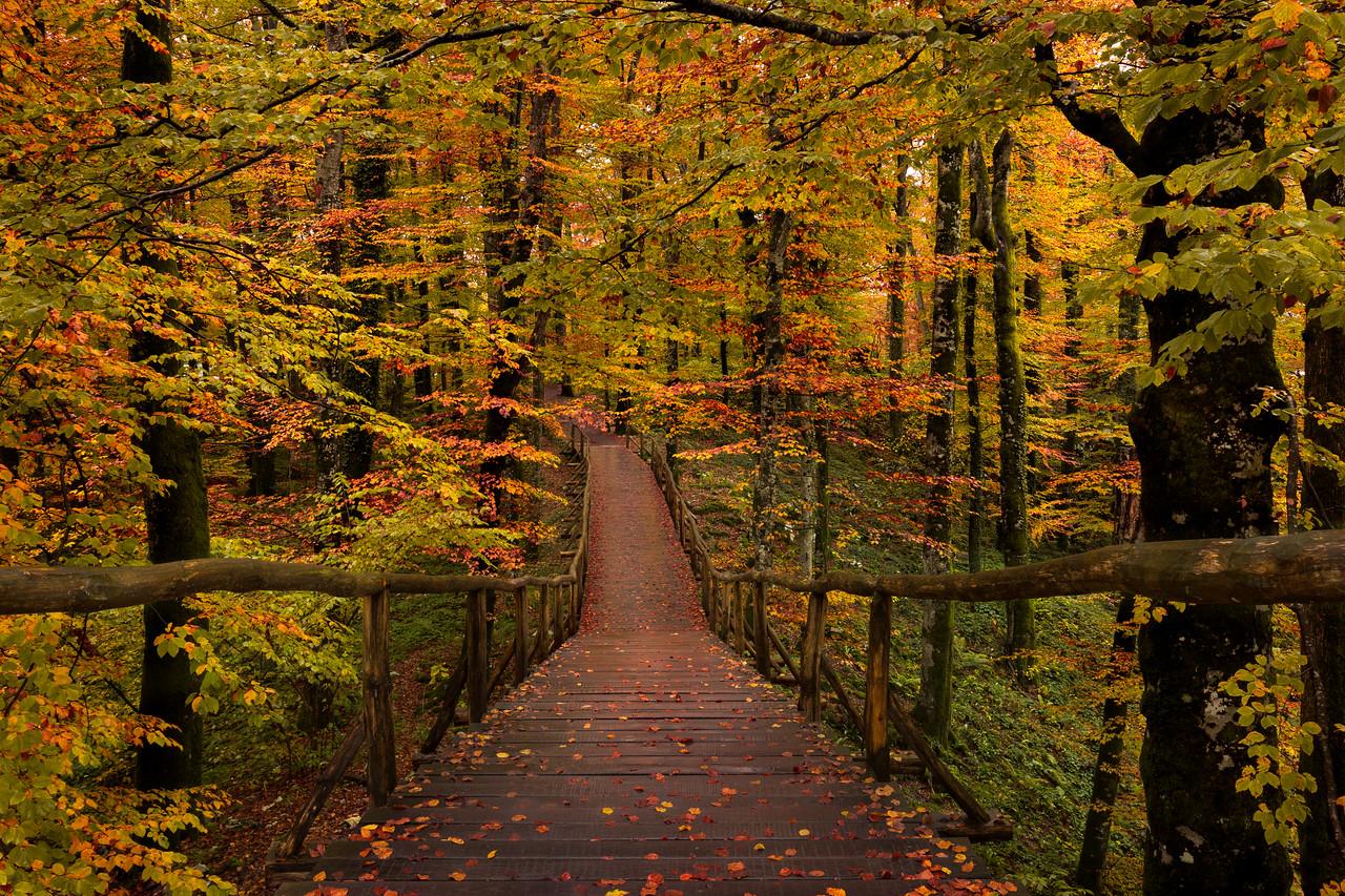 Autumn Forest || Croatia