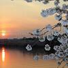 Sunset during the Cherry Blossom Festival