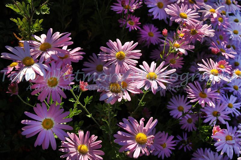 Williamsburg blooms