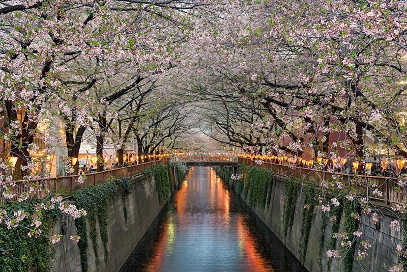 Along The Meguro River    Tokyo Japan