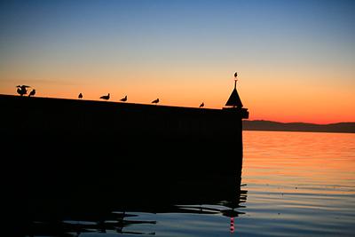 birds-on-breakwater