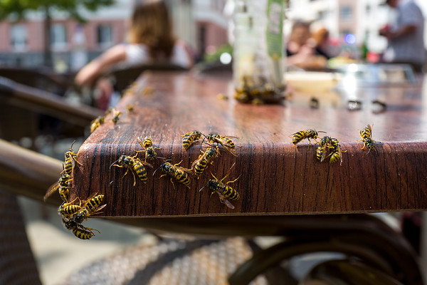 Wasps in a cafe