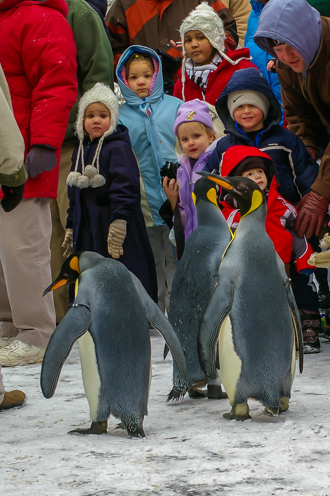 Penguins on the loose!