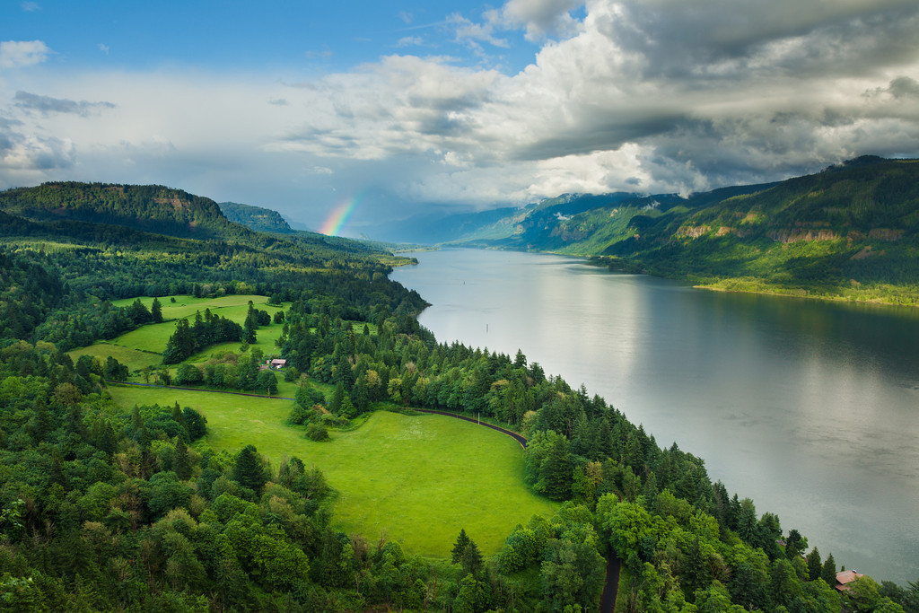 Columbia River Rainbow