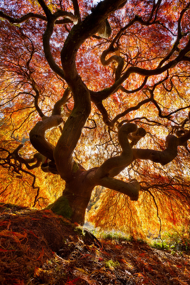 Glowing Canopy