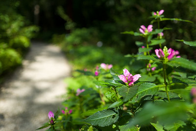purple flowers in botanic garden