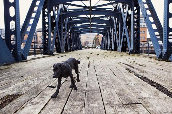 black lab on bridge