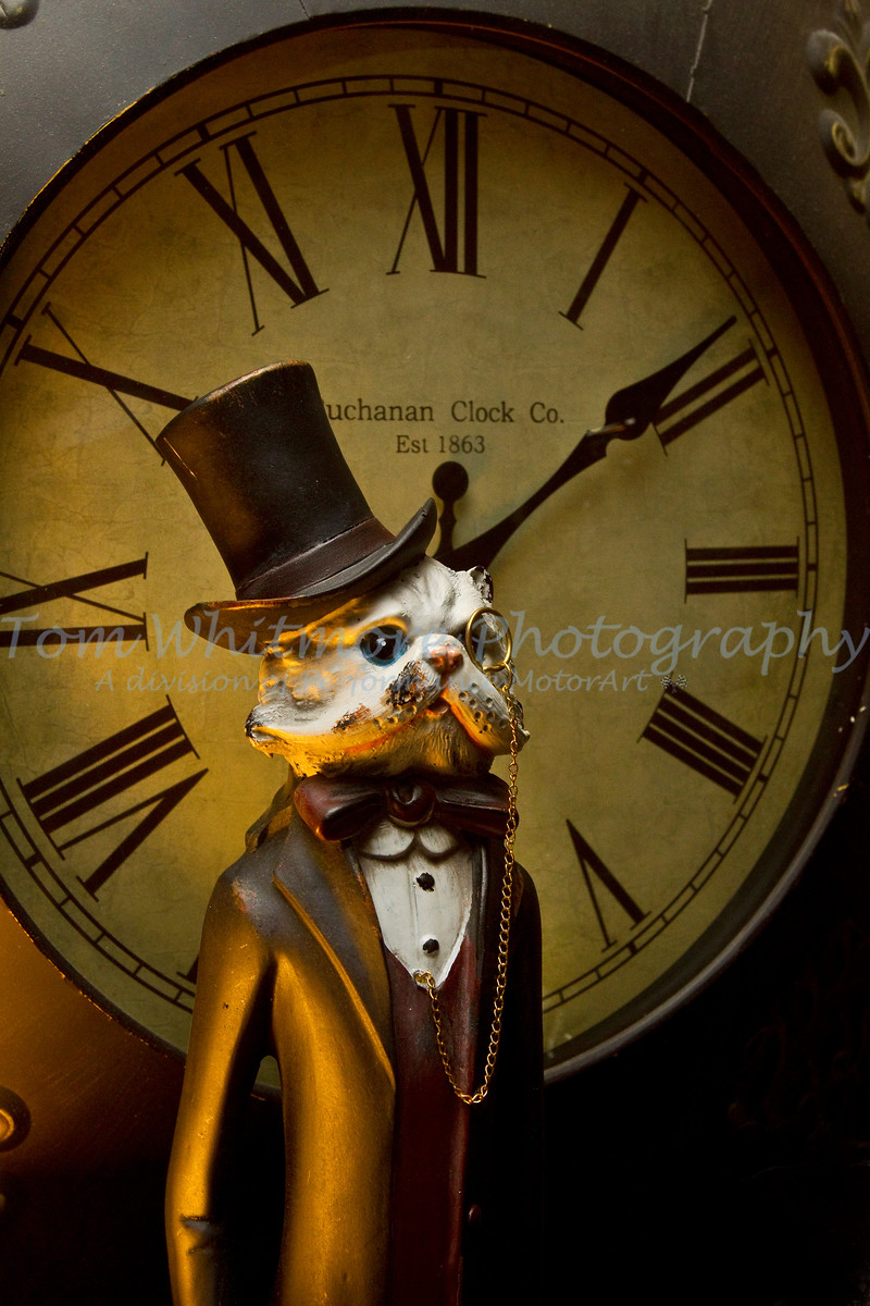 A sophisticated cat in time