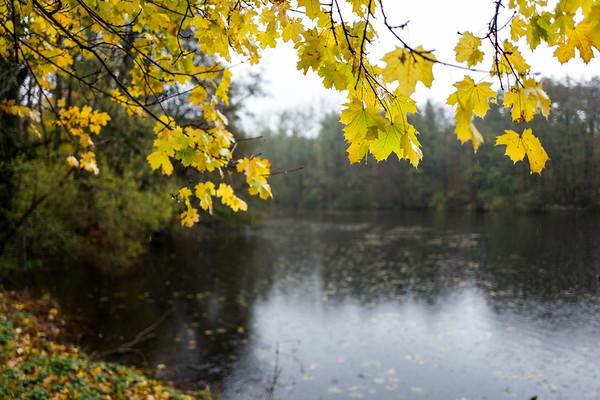 Leaves at Backhausteich in Kranichstein, Germany.
