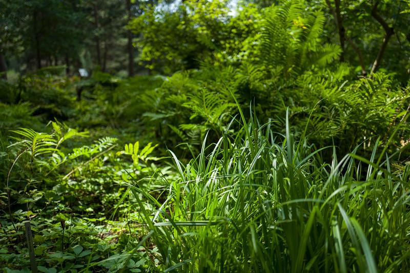 Green Leaves in Botanic Garden