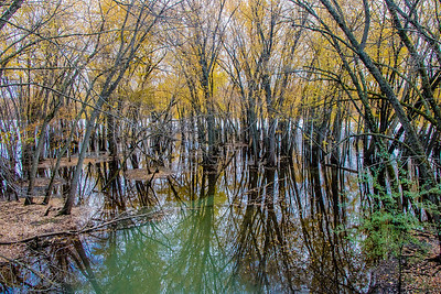 flooded trees 3
